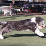 Running at the Dog Park